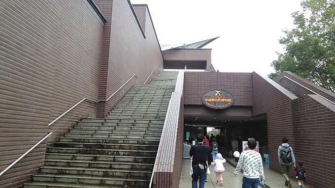 雨でも子供と楽しめる博物館