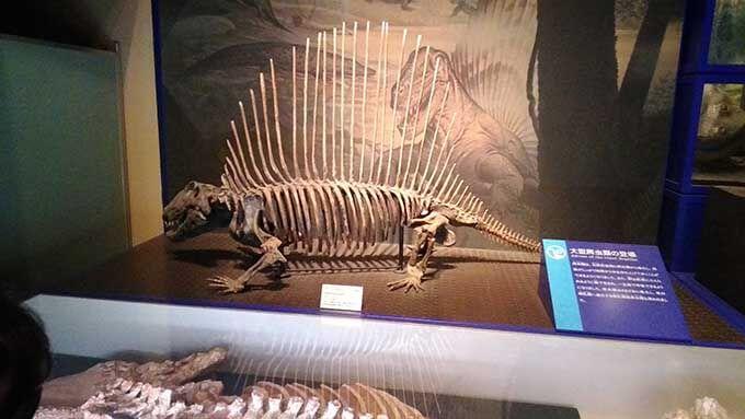 子供と楽しむ博物館!恐竜の化石